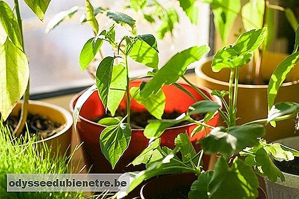 5 formas caseras de humidificar el aire en casa - Humidificar el ambiente ...