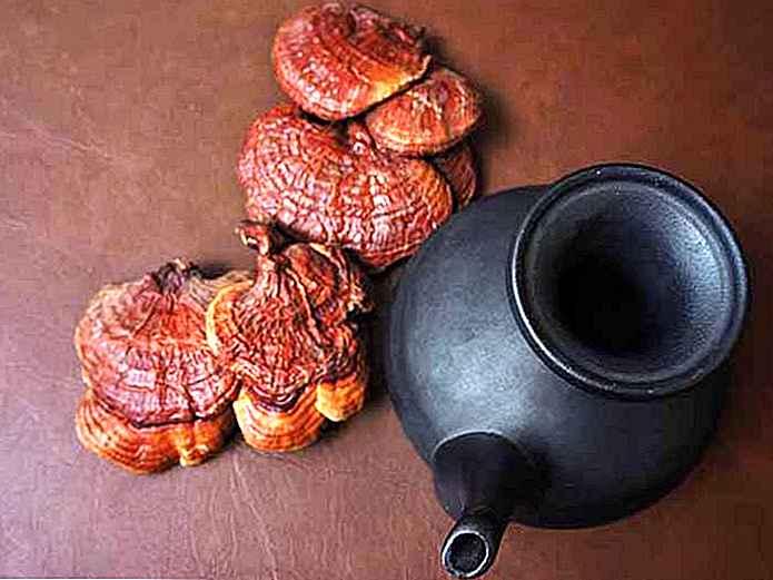pierdere în greutate ceai de ciuperci